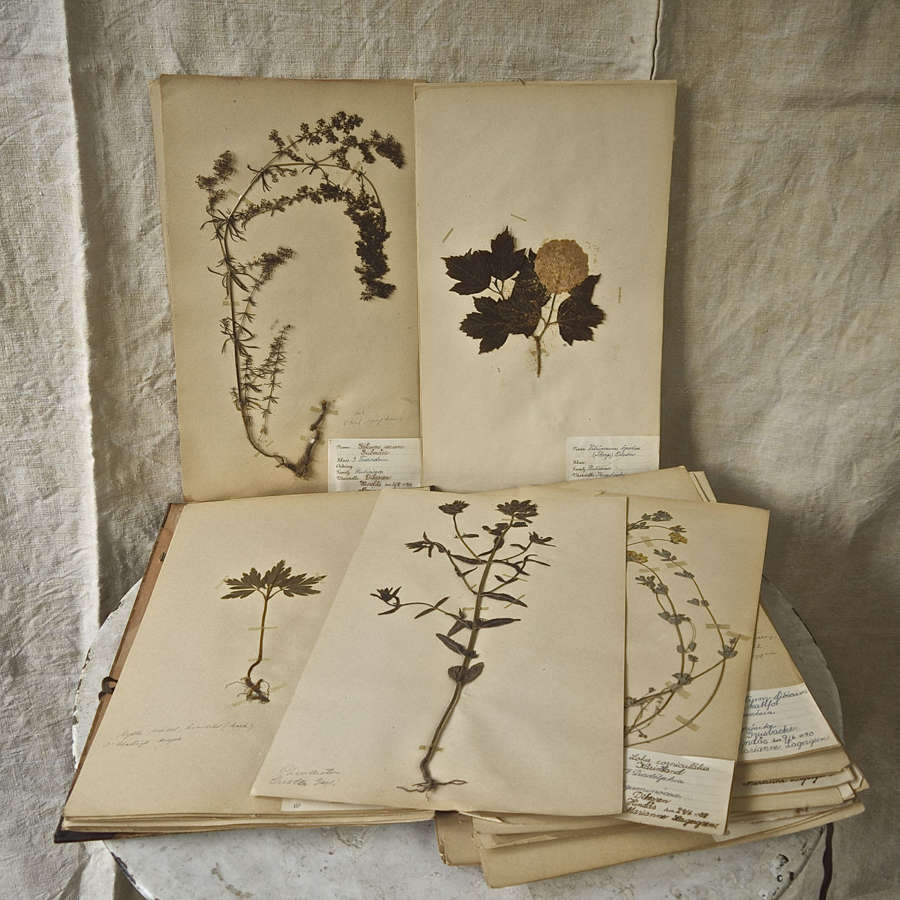 Herbarium 50 Sheets Swedish C1938-1942