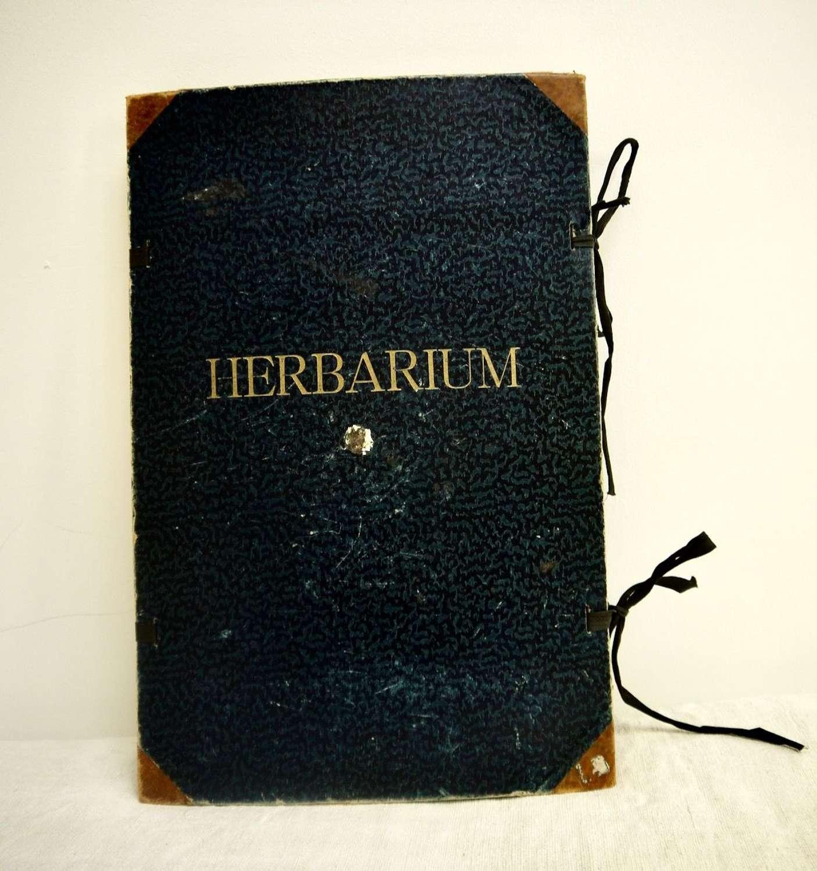 Herbarium 40 Sheets Swedish c1940s